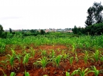 ruiru plot for sale